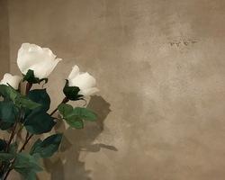 Décor istinto chamaré peinture décorative - Epinal - Robin et fils